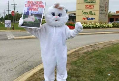 Rabbit Advocacy Network – Page 11 – Fighting for Rabbits…and